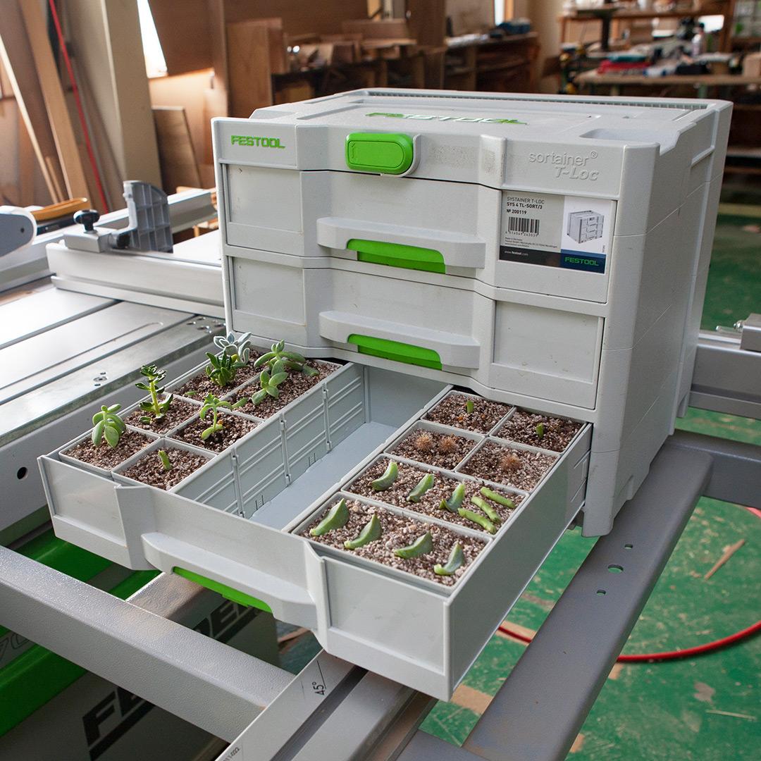 FestoolのSystainer Sortainerに多肉植物を植える