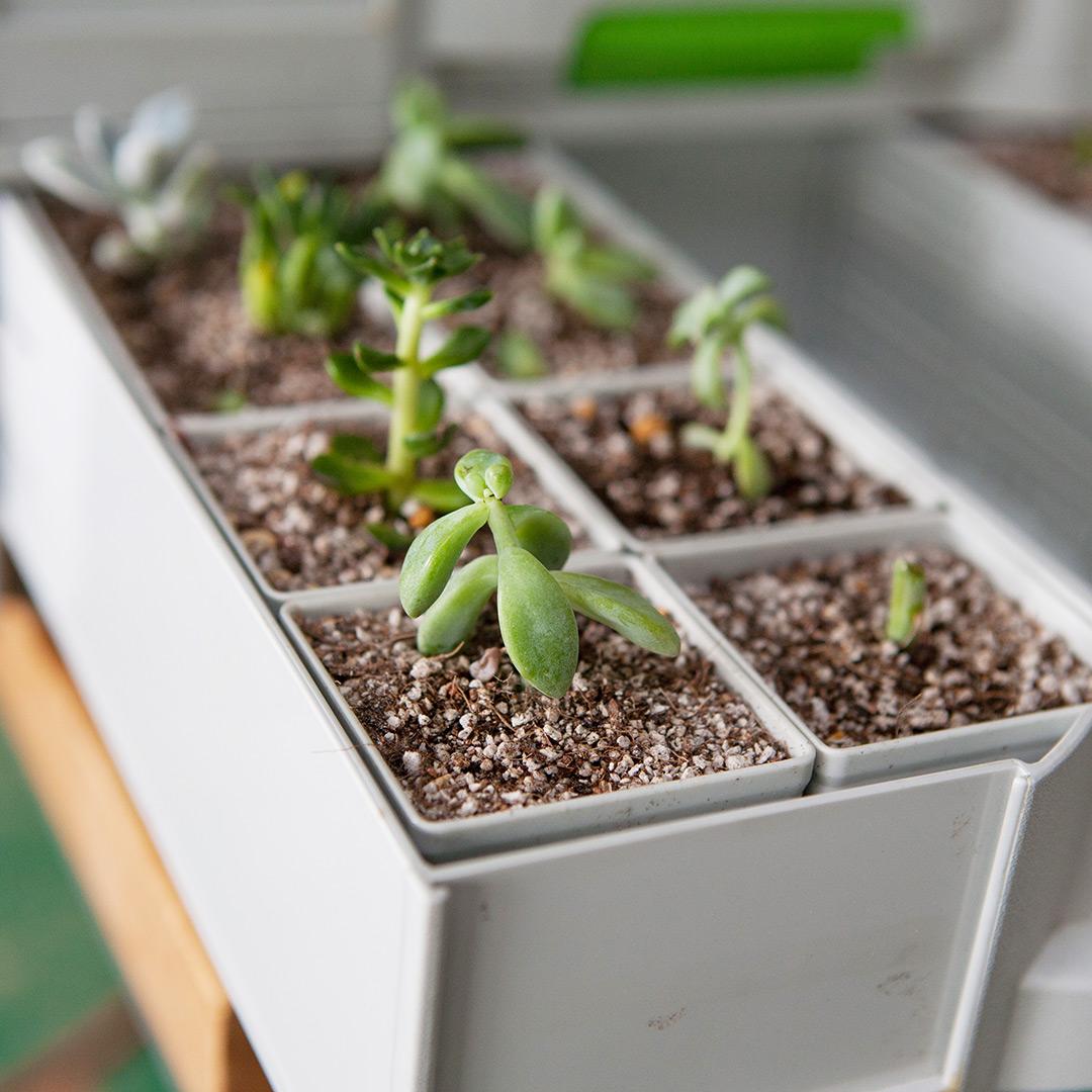 工具箱に植えた多肉植物