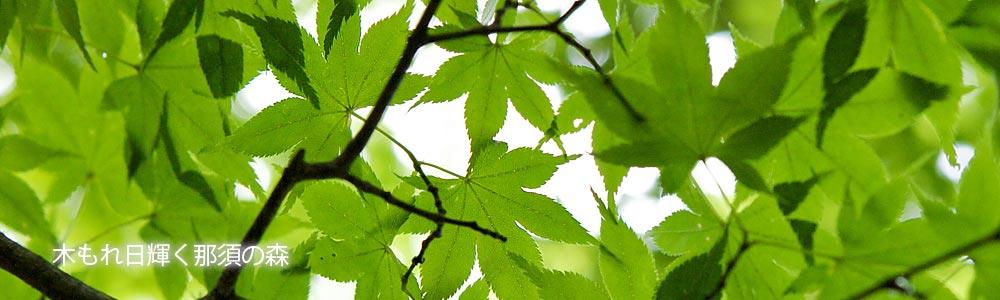 ブログ 木もれ日輝く那須の森 夏の緑色のモミジの葉
