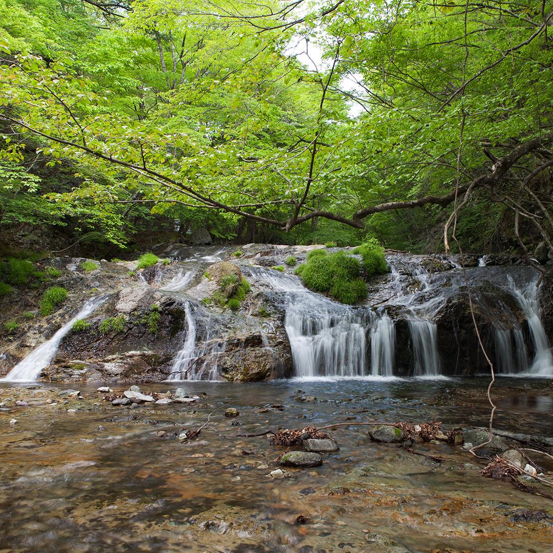 新緑が美しい滝