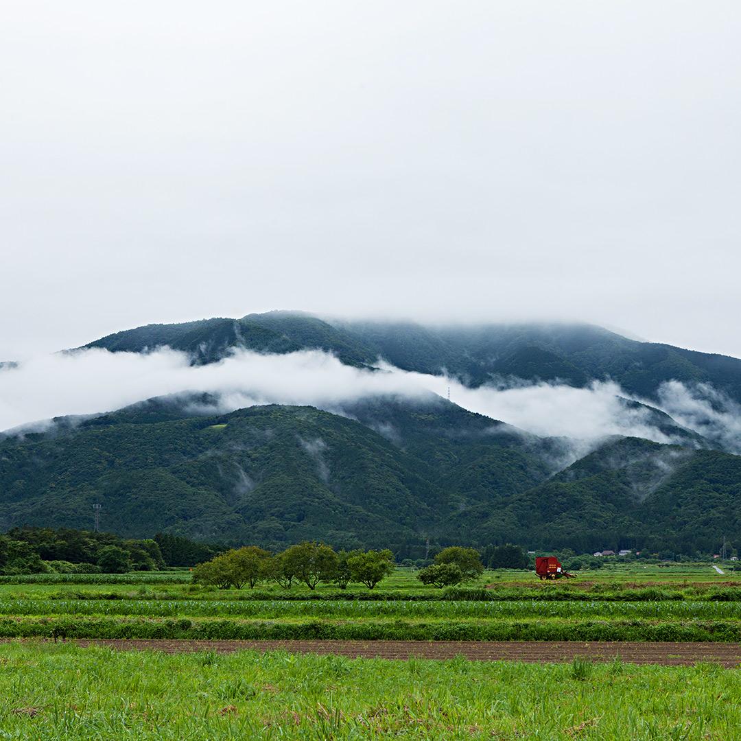 雨上がりの山