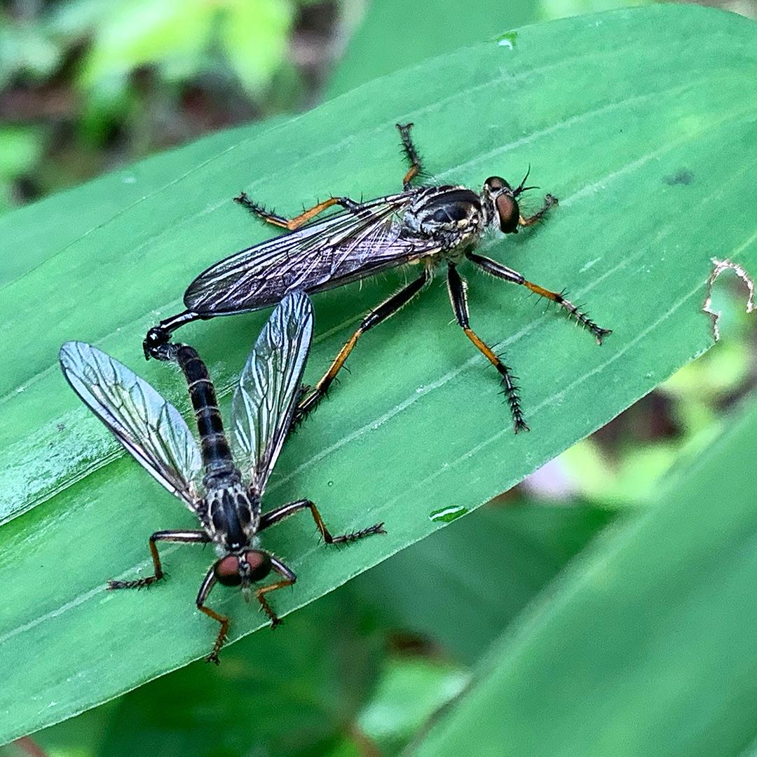 虫の交尾を接写